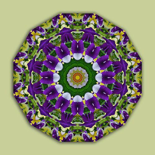 Flower Mandala, Pansies green, violett