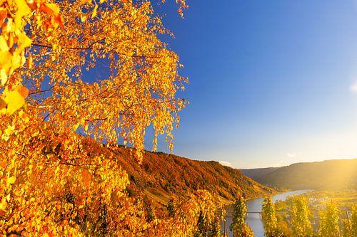 Herfst landschap aan de Moezel in Duitsland