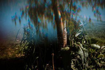 Het onkruid dat mocht blijven staan van Willeke Photography
