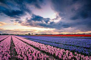 Holländische Landschaft mit Blumen