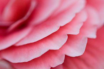 Roze rozen blaadjes van Simone Haneveer