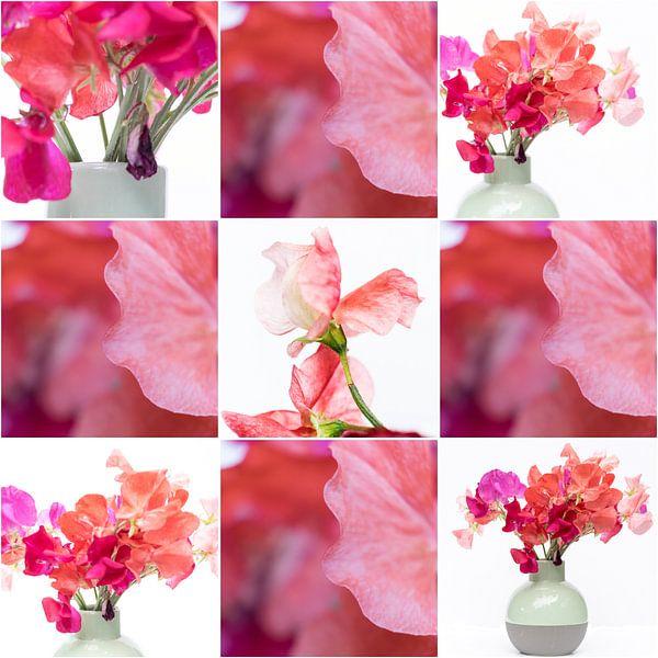 Lathyrus - collage 3 von Rob van der Pijll