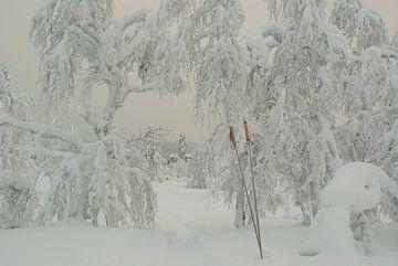 Stokken in de sneeuw van Miranda Zwijgers