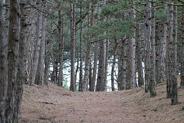 Path Up van Erwin Delsman