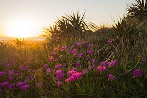Bloemen met zonsondergang van