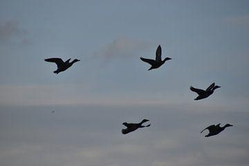 Vliegende eenden van Naomi Visser