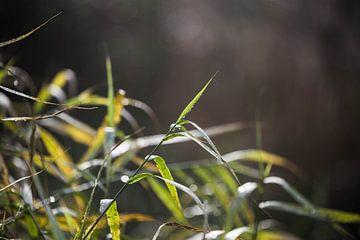 groen gras van Emma van Veldhuisen