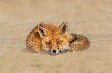 Fauler Fuchs von Anna Stelloo