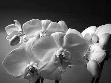 Orchideen  in zwartwit von Nathan Okkerse