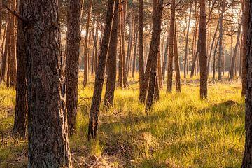 Holländische Savanne mit vielen Bäumen in Sicht. von Enrique De Corral