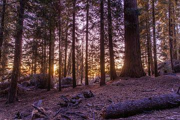 Zonsondergang in Sequoia National Park van Rolan ter Schegget
