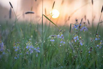 Blumen Teil 117 von Tania Perneel