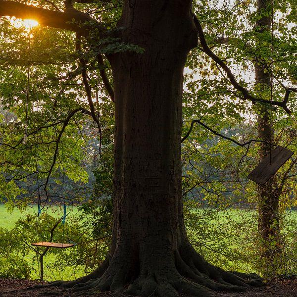 schommel in de boom van ÇaVa Fotografie