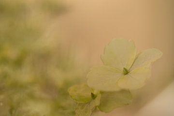 bloemen von Ries IJsseldijk