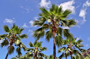 Viele tropische Palmen vor blauem Himmel
