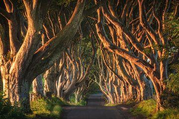 Donkere Hedges in Noord-Ierland in het ochtendlicht van Jean Claude Castor