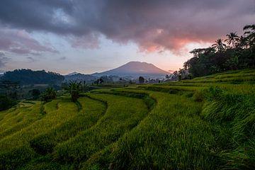 Reisfelder am Vulkan Gunung Agung in Sidemen von Ellis Peeters