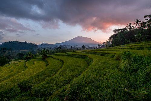 Rijstvelden bij Vulkaan Gunung Agung in Sidemen