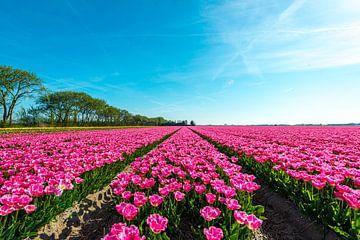 Violette Tulpen Landschaft von Ruurd Dankloff