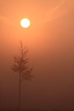 Mistige zonsopkomst met boom van Bobsphotography