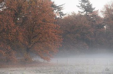 mistige herfst van Tania Perneel