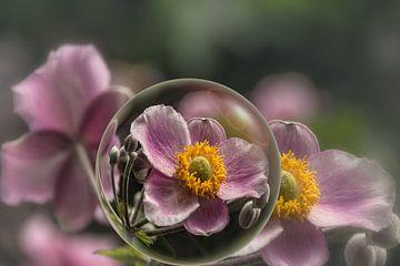 In de glazen bol - herfstanemoon van Christine Nöhmeier