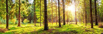Fichtenwald von Günter Albers