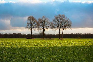 Een kleurrijk hollands landschap van Petra Brouwer