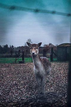 Bambi van Tom Paquay