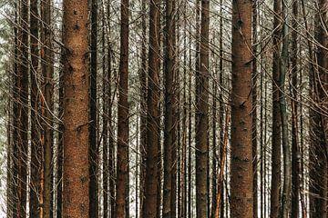 Ardennen ❘ Nadelwald ❘ Rhythmische Bäume ❘ Naturfotografie von Floor Bogaerts