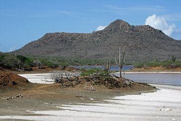 Saliña met zout Washington Slagbaai Park Bonaire. van Silvia Weenink
