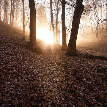 Magisches Licht  004 von Oliver Henze