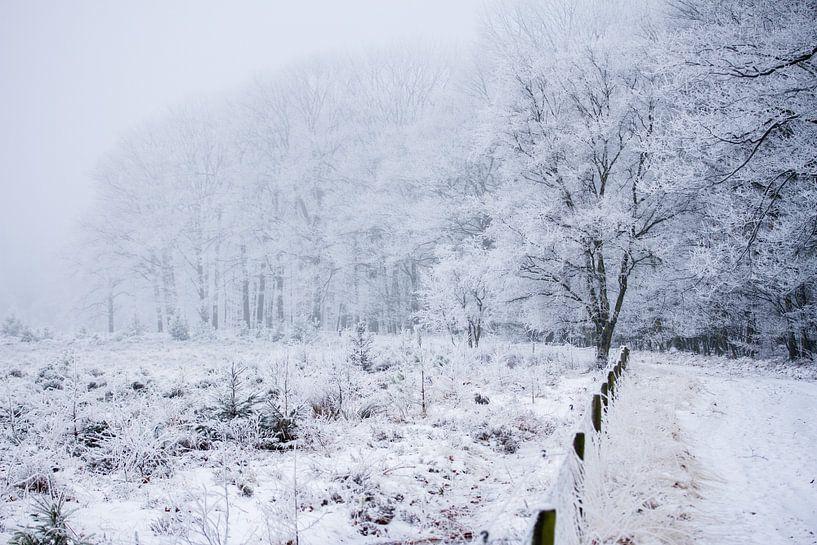 besneeuwd bos van Karijn   Fine art Natuur en Reis Fotografie