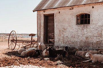 Oude boerderij van Yana Spiridonova