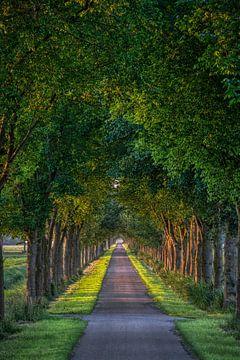 In de Noord Hollandse polder