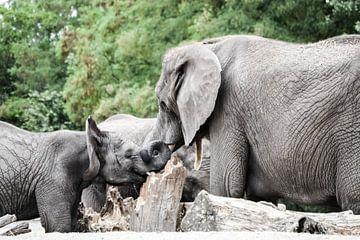 elephant love van melissa demeunier
