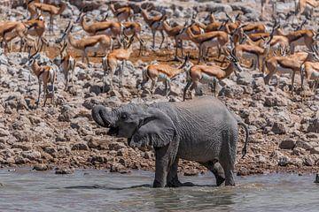 Junger Elefant am Wasserloch sur Felix Brönnimann