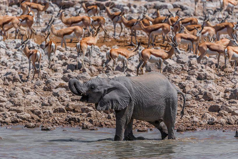 Junger Elefant am Wasserloch van Felix Brönnimann