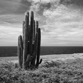 Cactuses on Bonaire sur Vanessa Devolder