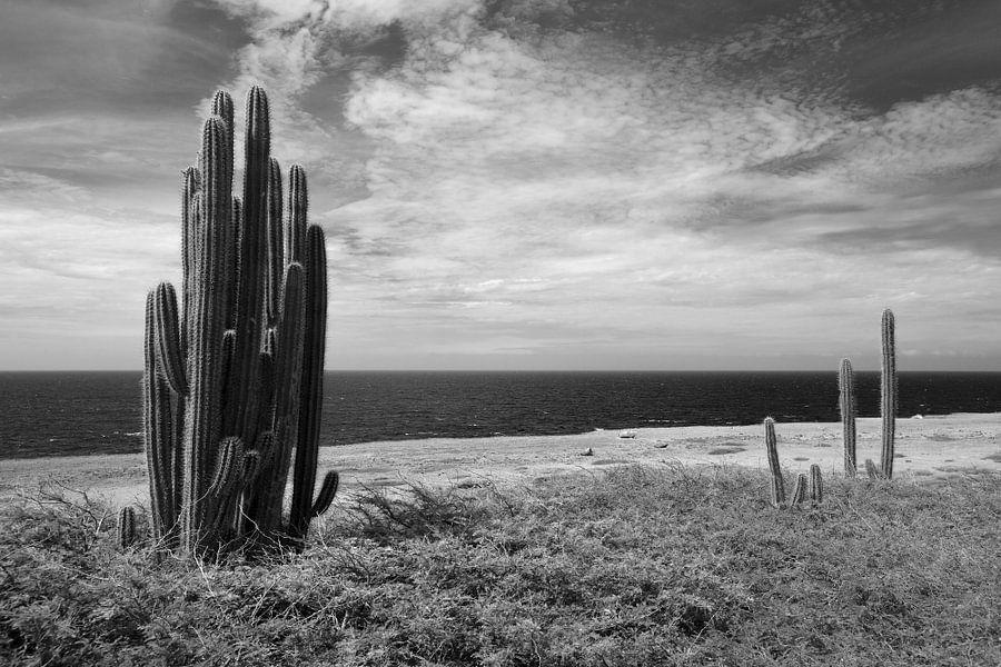 Landschap met zee en cactussen. Bonaire. van Vanessa Devolder