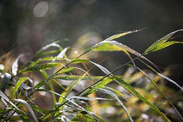 Groen gras von Emma van Veldhuisen