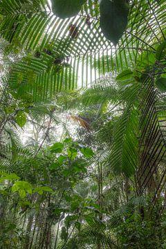 Nebelwald,Ecuador von Hanneke Bantje