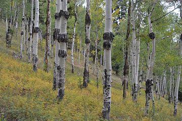 Colorado, Amerika van Bernard van Zwol