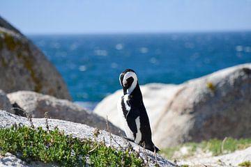 Pinguin in Kaapstad van Mylène Amoureus