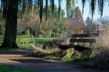 Einsam im Park von Alejandro Vivas