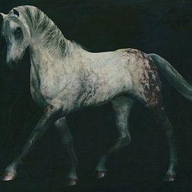 Pferde -Weißes Pferd bei einer Dressurübung von Jan Keteleer