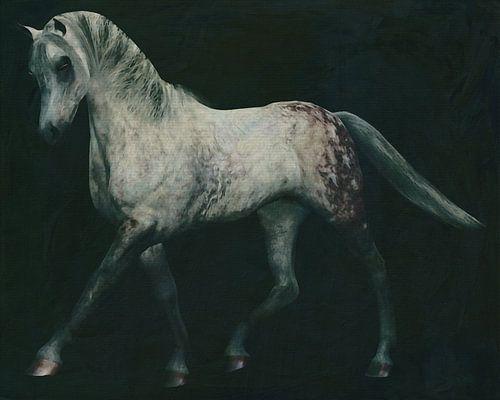 Pferde -Weißes Pferd bei einer Dressurübung
