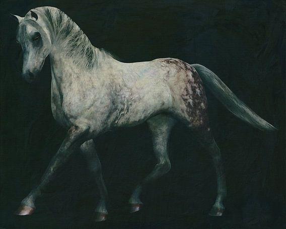 Paarden -Wit paard doet dressuur oefening