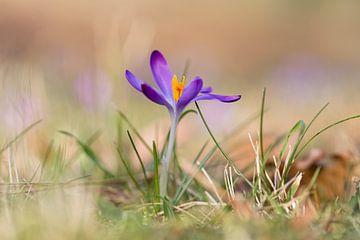 Frühling..! von Miranda van Hulst