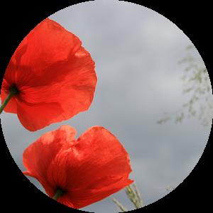 Poppy in the sky van Sandra van Vugt